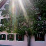 """Hallstatt - Sunlit Tree"" by LefflerPhotography"