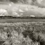"""Ridgefield wetlands"" by billburk"