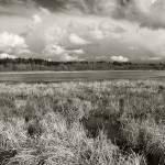 """Ridgefield wetlands"" by billburk"