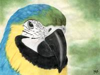 Blue and Gold Macaw Watercolor