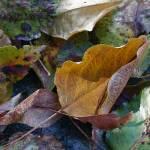 """Autumn Illuminated"" by MyThirdEye"