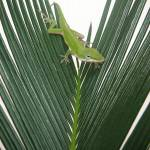 """Anole With Palm - Assertive"" by lucyna"