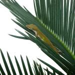 """Anole With Palm - Coy"" by lucyna"