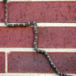 """""""Snaking Up A Brick Wall"""" by lucyna"""
