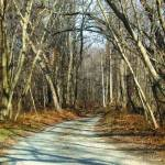 """""""Follow the Road"""" by Kimmary"""