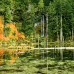 """June lake"" by billburk"