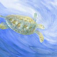 sea turtle submerging Art Prints & Posters by Lisa McLaughlin