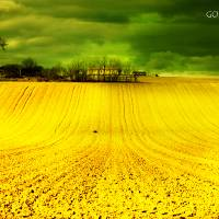 GOLDEN FIELDS Art Prints & Posters by roberto lorenzoni