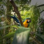 """Parrot In A Tree With A Blurred Edge"" by biglnet"