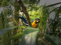 Parrot In A Tree With A Blurred Edge