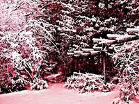 what if it snowed in PINK?
