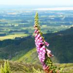 """foxglove with a view"" by BrendaAnderson"