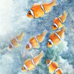 """clownfish school"