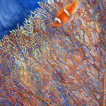 """clownfish hiding in fancoral"" by LisaMclaughlin"