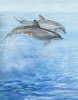 playful dolphins