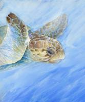 loggerhead turtle's journey