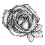 """""""Rose"""" by jrc3ky"""