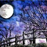 """""""Moon o"""
