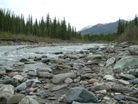 Riley Creek, Denali