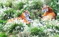 Tigers Resting In Long Grass Oil