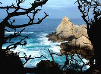 A Point Lobos Day