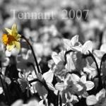 """dafadils-029_edited-2"" by jonathantennant"