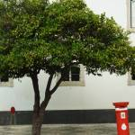 """Orange Tree and Postbox - Faro"" by laptoppingpong"