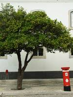 Orange Tree and Postbox - Faro