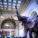 """Field Museum"" by bryanscott"
