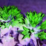 """""""Purple and Green Flowers"""" by crazyabouthercats"""