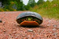 turtle on gravel