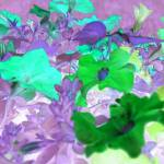 """Petunia Abstract"" by crazyabouthercats"