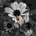 """""""Bee"""" by weckphotography"""