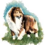"""Sheltie Watch Shetland Sheepdog Kathleen Sepulveda"" by KathleenSepulveda"