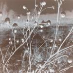 """Landscape Abrstract"" by crazyabouthercats"