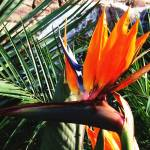 """Bird Of Paradise Flower Oil Painting"" by justbyjulies"