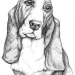 """basset hound"" by shaney442"