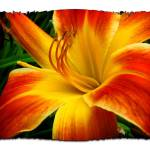 """flame day lily"" by shaney442"