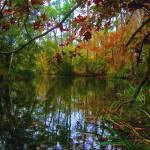 """Bayou Cane Autumn"" by micreusa"