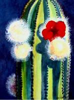 Organ Pipe Cactus Bloom