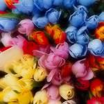 """Tulips Amsterdam"" by kenart"