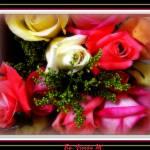 """""""~""""My Beloved,Fair,Kind True,Sweet Soul,My Rose""""~"""" by vivsirena"""