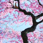 """Cherry Blossoms"" by SherriJackson"