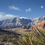 """""""Mojave Desert"""" by EdCooper"""