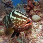 """IMG_7394-Grouper"" by checkman"