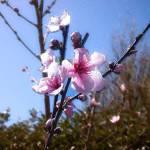 """""""blossom"""" by abrilAE"""