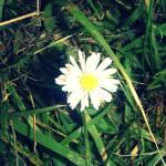 """""""daizee"""" by erin_landgraf"""