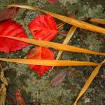 """""""Wet Leaves"""" by flowphotography"""