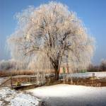 """""""Hoary tree channel on a coast."""" by Berezvai"""