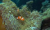 Nemo at home